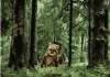 Играй на На лов за мечки - games